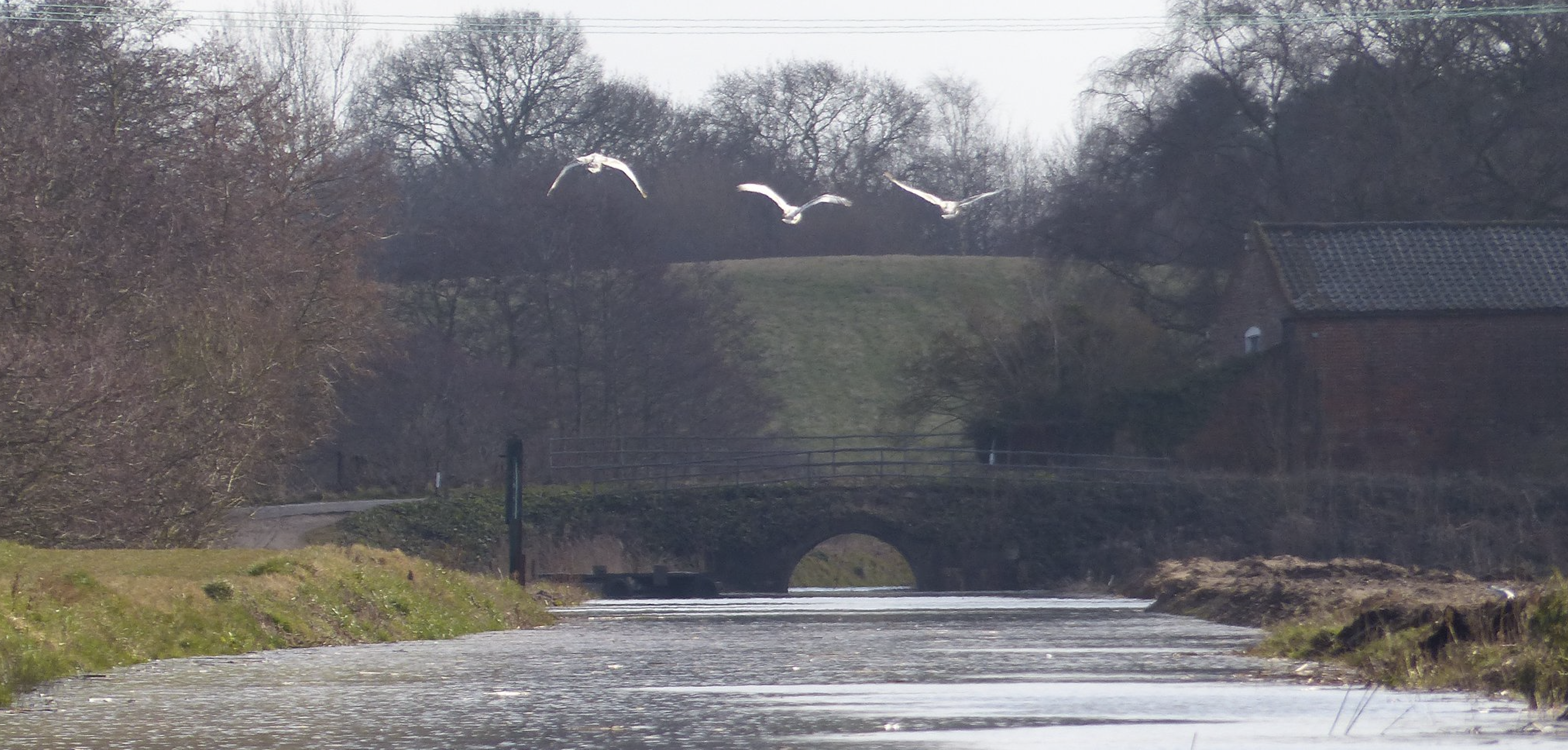 The canal at Royston Bridge after a trial re-watering in January 2018. Photo taken by the Reverend Paul Cubitt